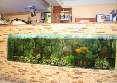 Krisstek - Restauracja Akwarium - 3